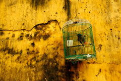 Jaula de pájaro colgante contra la pared amarilla Imágenes de archivo libres de regalías