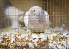 Jaula de pájaros Fotografía de archivo