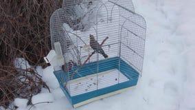 Jaula de pájaros abandonada debajo de la nieve almacen de video