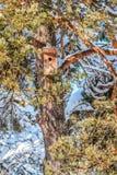 Jaula de pájaros en coníferas nevadas en el sol fotografía de archivo