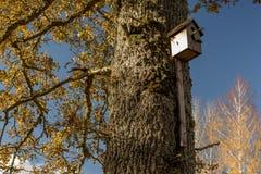 Jaula de pájaros en roble Foto de archivo libre de regalías
