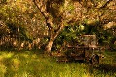 Jaula del pantano Fotografía de archivo