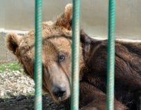 Jaula del parque zoológico del oso Fotos de archivo libres de regalías