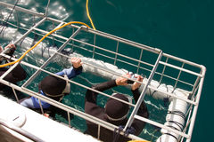 Jaula del tiburón Fotografía de archivo libre de regalías