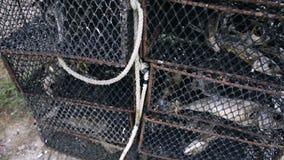 Jaula para los cangrejos almacen de metraje de vídeo