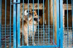 Jaula para los perros en refugio para animales Fotografía de archivo libre de regalías