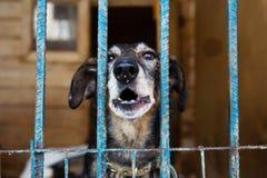 Jaula para los perros en refugio para animales Foto de archivo