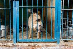 Jaula para los perros en refugio para animales Imagen de archivo