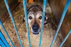 Jaula para los perros en refugio para animales Imágenes de archivo libres de regalías