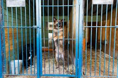 Jaula para los perros en refugio para animales Foto de archivo libre de regalías
