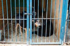 Jaula para los perros en refugio para animales Imagenes de archivo