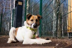 Jaula para los perros en refugio para animales Fotografía de archivo