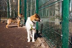 Jaula para los perros en refugio para animales Imagen de archivo libre de regalías