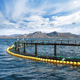 Jaula redonda de la granja de pescados Imagen de archivo