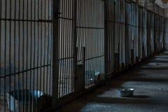 Jaulas en el refugio Fotografía de archivo