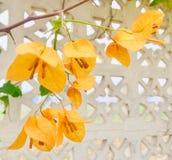 jaune Photos stock