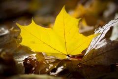 jaune Image libre de droits