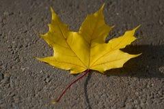 jaune Photos libres de droits