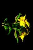 jaune Images stock