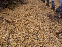 Jaune, automne, feuillage, la terre, chute, couleur, feuilles, saison, nature, avenue, fond, arbre, coloré, voyage, feuille, exté image libre de droits