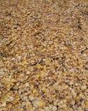 Jaune, automne, feuillage, la terre, chute, couleur, feuilles, saison, nature, avenue, fond, arbre, coloré, voyage, feuille, exté image stock