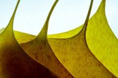Jaune avec des formes abstraites Image stock