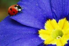 Jaune bleu rouge Photo libre de droits