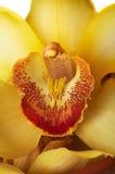 jaune de fleur Photo libre de droits