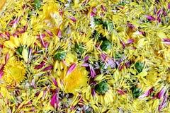 Jaune de fleur de fleur de pollen sur l'eau de surface pour la flore de festival de Songkran, fleur de festival de Songkran Photos stock