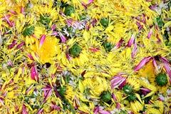 Jaune de fleur de fleur de pollen sur l'eau de surface pour la flore de festival de Songkran, fleur de festival de Songkran Photo libre de droits