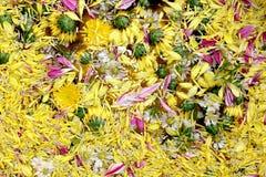 Jaune de fleur de fleur de pollen sur l'eau de surface pour la flore de festival de Songkran, fleur de festival de Songkran Photos libres de droits