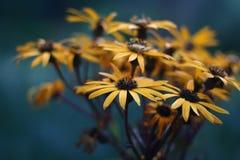 jaune de fleurs Images libres de droits