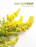 jaune de fleurs Image stock