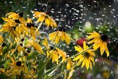 jaune de fleurs Photo libre de droits