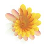 Jaune de fleurs Photos libres de droits