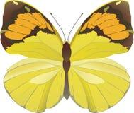jaune de guindineau Images libres de droits