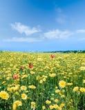 jaune de prairie Image stock
