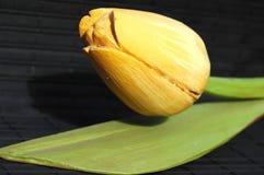 jaune de tulipe Photos libres de droits