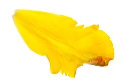 jaune de tulipe de pétales Photo libre de droits