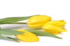 jaune de tulipes Photo libre de droits