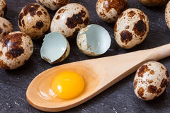Jaune des oeufs de caille en cuillère en bois et oeufs de caille Image stock