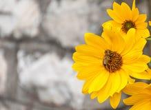 Jaune en jaune Photographie stock