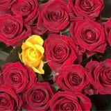 Jaune en rouge Image stock