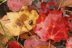 Jaune et rouge Images stock