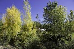 Jaune et vert Photos libres de droits