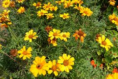 Jaune et vert fleurissants de floraison de fond de fleurs Photo stock