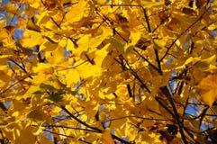 jaune intense d'automne de couleur photos stock