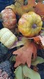 Jaune, orange, feuilles d'automne image libre de droits