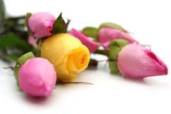 jaune rose de roses Image libre de droits