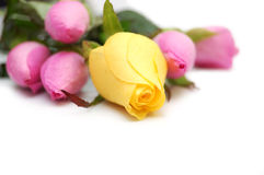 jaune rose de roses de bouquet Photo libre de droits